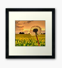 Seed Field Framed Print