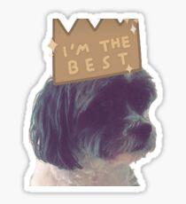 Baxter ~ Shih tzu/Poodle Sticker