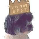 Baxter ~ Shih tzu/Poodle by lilyantess