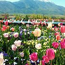 Smiling Tulips by Lani Chipman