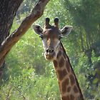 Portrait of a Giraffe by Hermien Pellissier