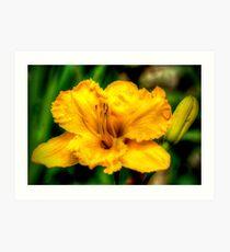golden flower of brookgreen Art Print