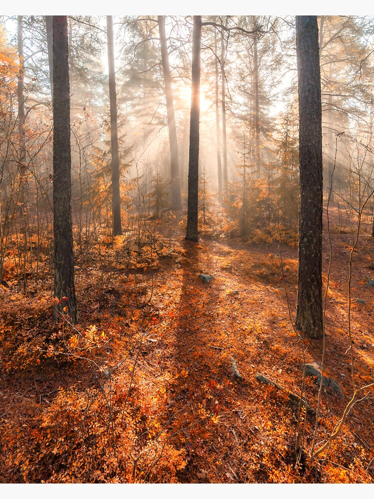 Foggy morning autumn forest by Juhku