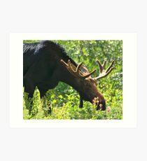 Moose In The Basin Art Print