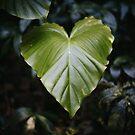 green heart by Sue Hammond