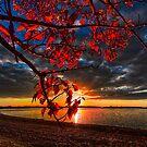Autumn Illumination by IanMcGregor