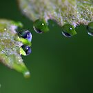 Water Droplet III by Ostar-Digital