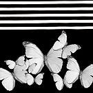 Black w/ White Butterflies by Yvette Crocker