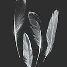 Gull Feather Collection no. 2 by Bethany Helzer