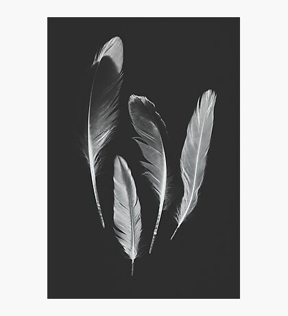 Gull Feather Collection no. 2 Photographic Print