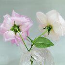 Two Vintage Roses by LouiseK