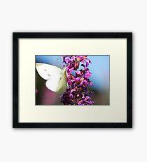 Flutter...Flutter... Framed Print