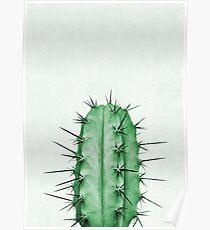 Cactus Plant Poster