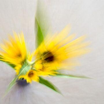 Sunflower Spray by cherylintexas