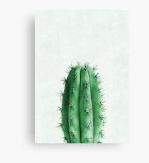 Cactus Plant №2 Canvas Print