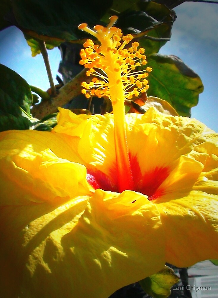 Earth laughs in flowers. ~ Ralph Waldo Emerson by Lani Chipman