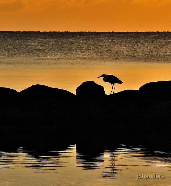 The morning heron by jchanders
