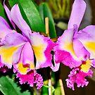 Orchid... by Wieslaw Jan Syposz