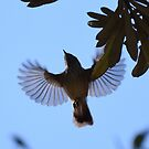 Striated Thornbill in Flight by Toradellin