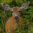 Hello My Deer! by Shari Galiardi