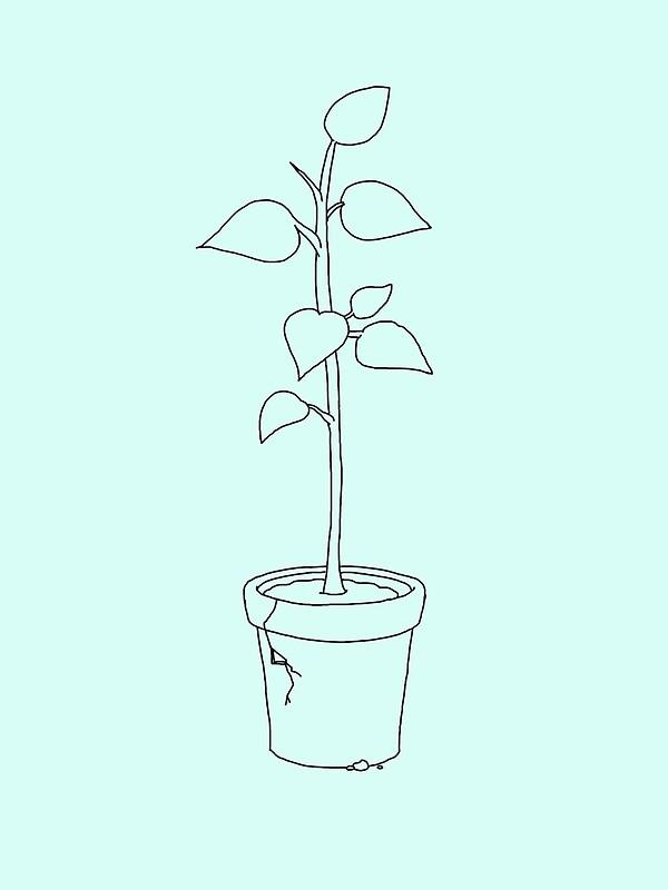 Line Art Tumblr Aesthetic : Quot tumblr plant outline aesthetic art prints by tyroka