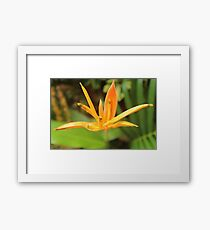 Beautiful Flower, Hamilton Island Framed Print