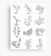 Floral Constellation - Ensemble Metal Print