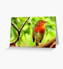 Alert Robin  Greeting Card
