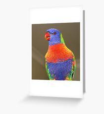 Rainbow Lorikeet Greeting Card