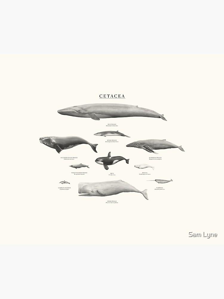 Cetacea by samlyneill
