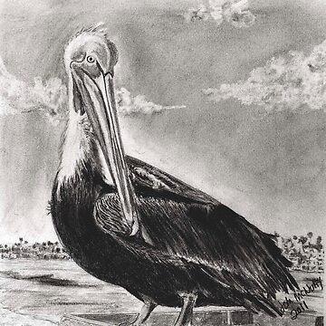 Pelican by jmac64