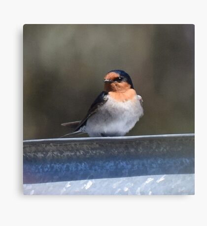 Tree Martin Canvas Print