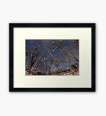 Autumn along the River Framed Print