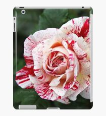 Peppermint Rose ~ Sweet and Spicy  iPad Case/Skin