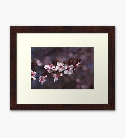 Spring Is Blossom Framed Print