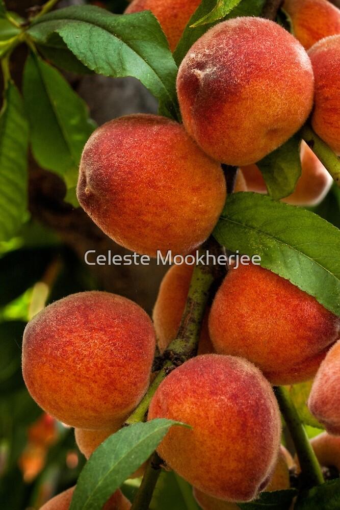 Bountiful peaches by Celeste Mookherjee