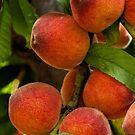 Freigebige Pfirsiche von Celeste Mookherjee