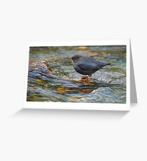 water ouzel, american dipper in stream Greeting Card