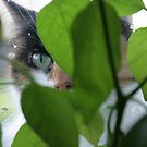 Eye of the little tiger by Profo Folia