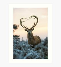 Stag With the Heart Shaped Antlers (love you deer) Art Print