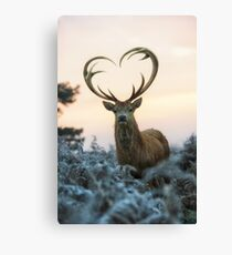 Stag With the Heart Shaped Antlers (love you deer) Canvas Print