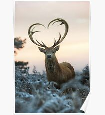 Stag With the Heart Shaped Antlers (love you deer) Poster
