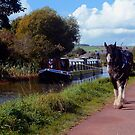 Grand Western Canal, Tiverton, Devon. England. by rodsfotos
