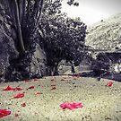 Camino con flores rosas by dedakota