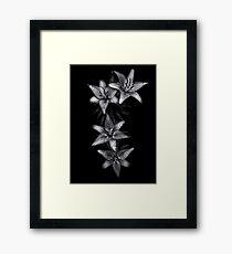 Backyard Flowers In Black And White 7 Framed Print