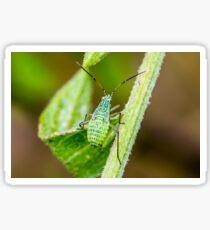 Mirid Bug Nymph Sticker