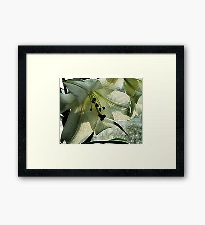 Leaf and Veins Framed Print