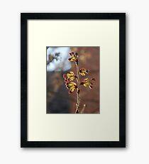 Buds Framed Print
