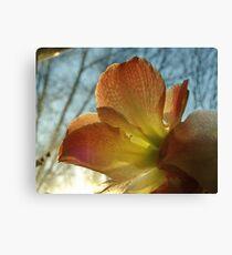 Amaryllis in the Window Canvas Print
