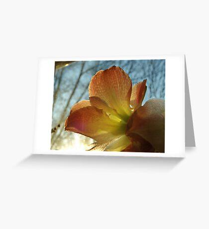 Amaryllis in the Window Greeting Card